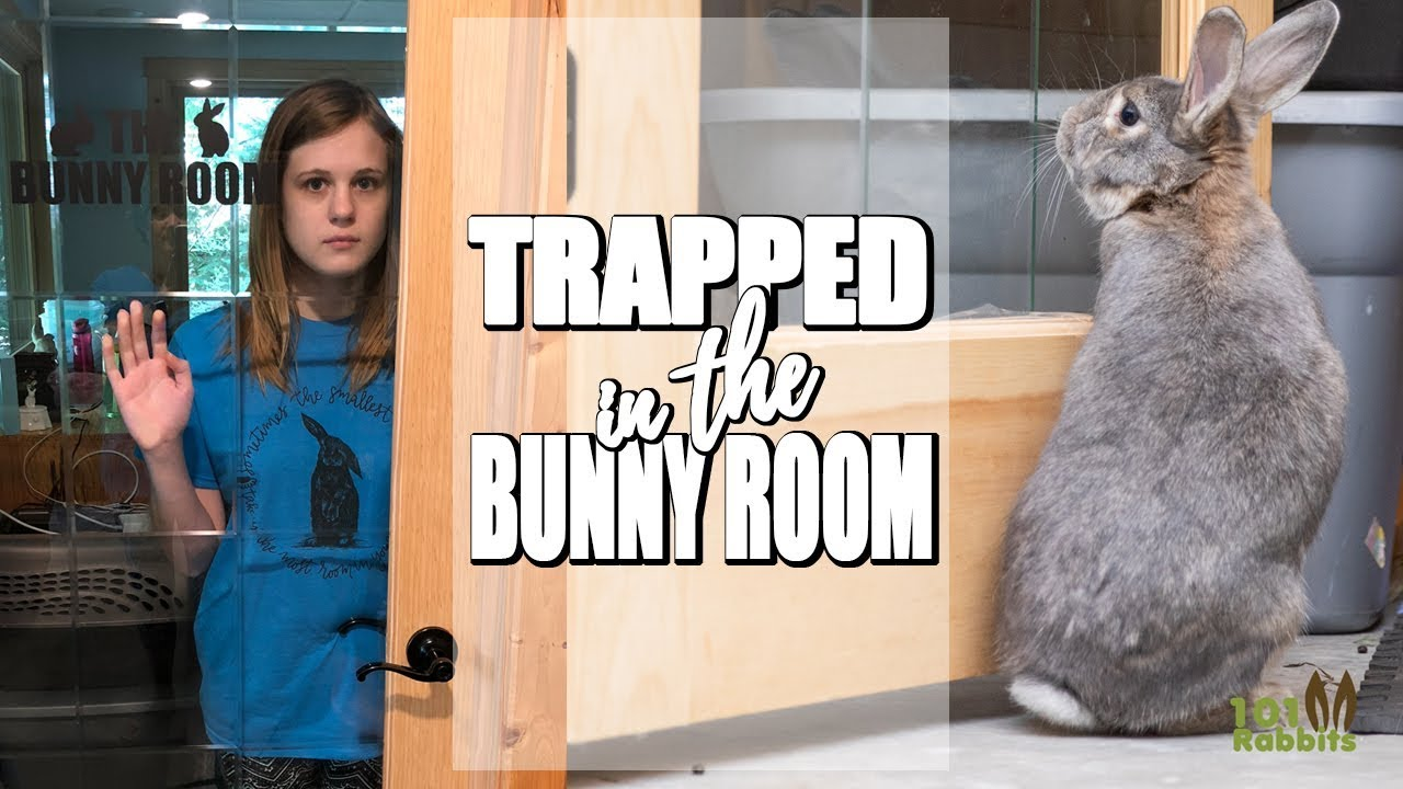 24 HOURS TRAPPED IN THE BUNNY ROOM 😱