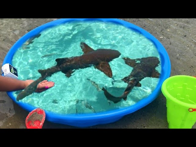 DIY Kiddie POOL FISH POND at BEACH!!!