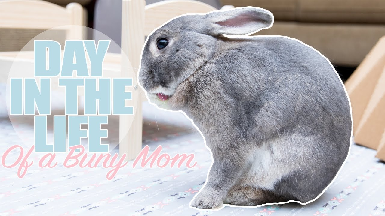 Day In The Life Of A Bunny Mom 🐰