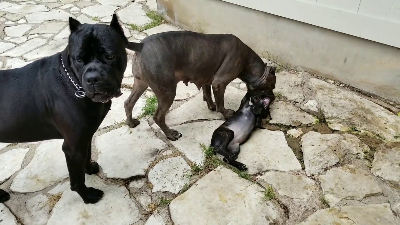 How mother dogs handle disrespectful puppies: Part 1