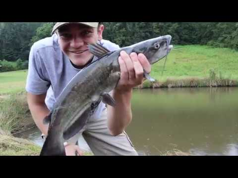 KENTUCKY FOOD CHAIN FISHING CHALLENGE!