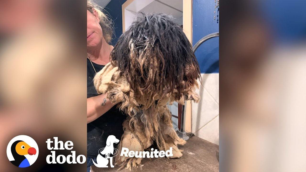 Matted Dog Gets a Makeover then Reunites with Her Puppies! | The Dodo Reunited Season 2