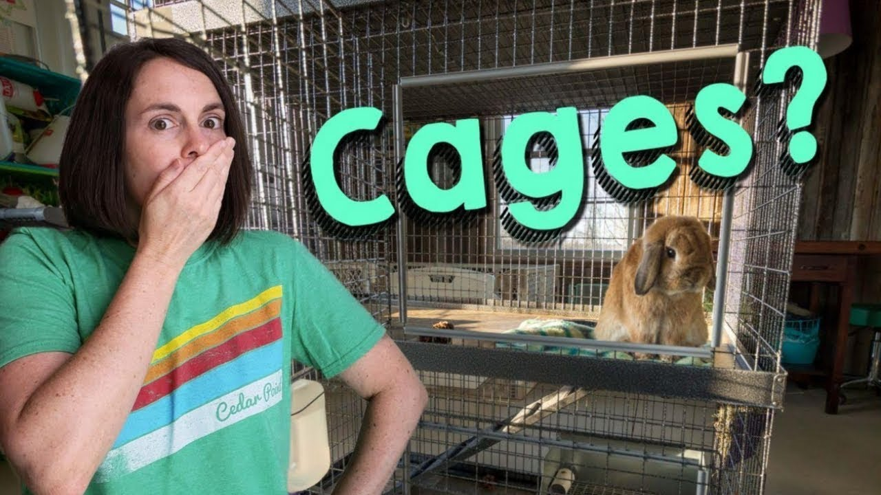 Rabbit Shaming: Should Bunnies be in Cages?