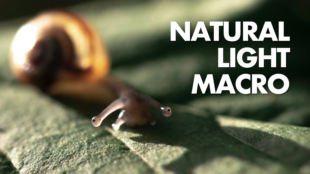 Tips for Natural Light Macro Photography (without flash)
